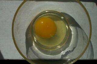 Egg0001