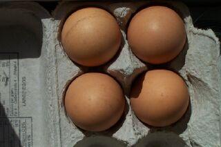 Egg0002